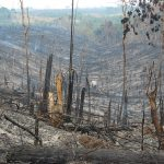 forest felled and burned
